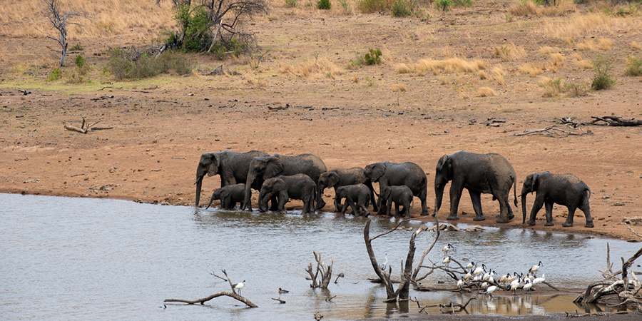 Sighting of Elephants at Tshukudu's waterhole