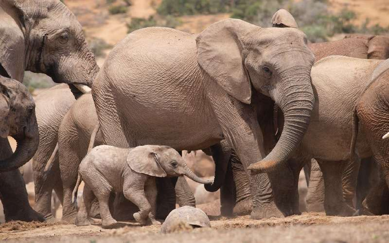 The Addo Elephant National Park Tour