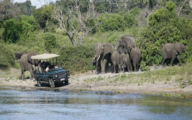 Chobe Safari Day Tour (Botswana)