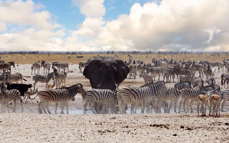 The Great Trans African Lodge Safari Tour (Zimbabwe, Namibia, Botswana) Picture *