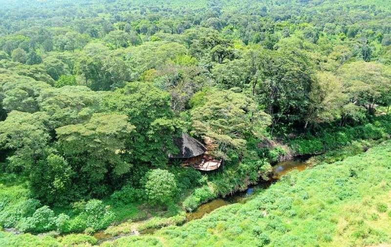 Kitich Camp Mathews Forest