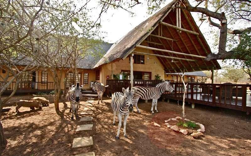 Needles Safari Lodge, Mpumalanga