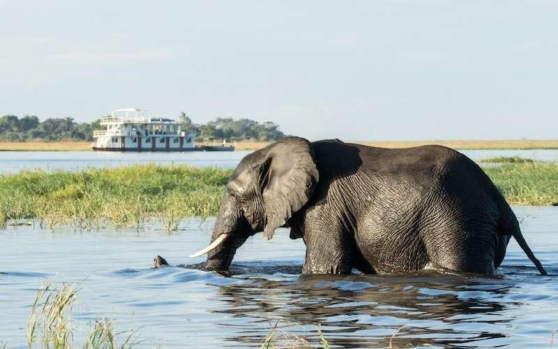 The Jackal & Hide, Okavango Delta, Botswana