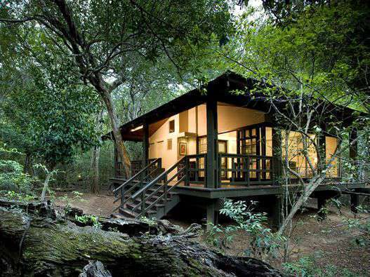phinda private game reserve forest lodge: suite