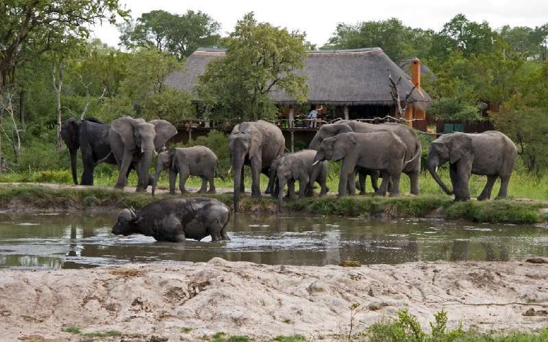 Simbambili Game Lodge, Sabi Sands