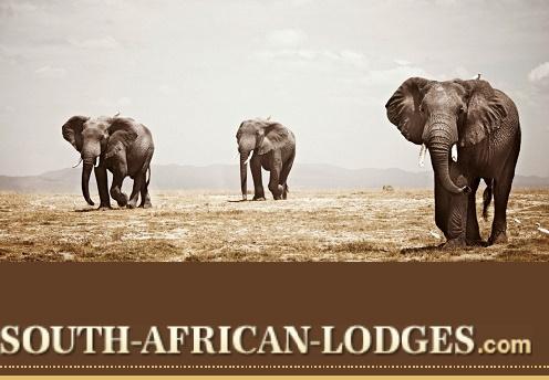 Singita sabi sands game reserve south africa