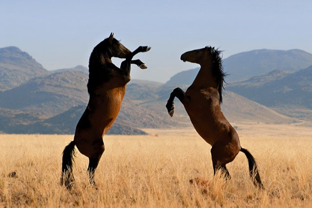Southern Namib Lodges Horse Safari