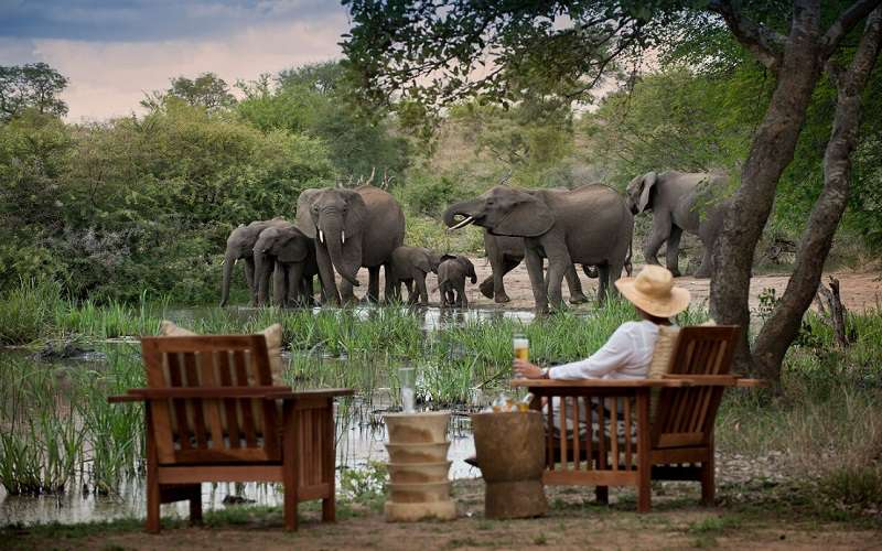 Tanda Tula Safari Camp, Timbavati Game Reserve
