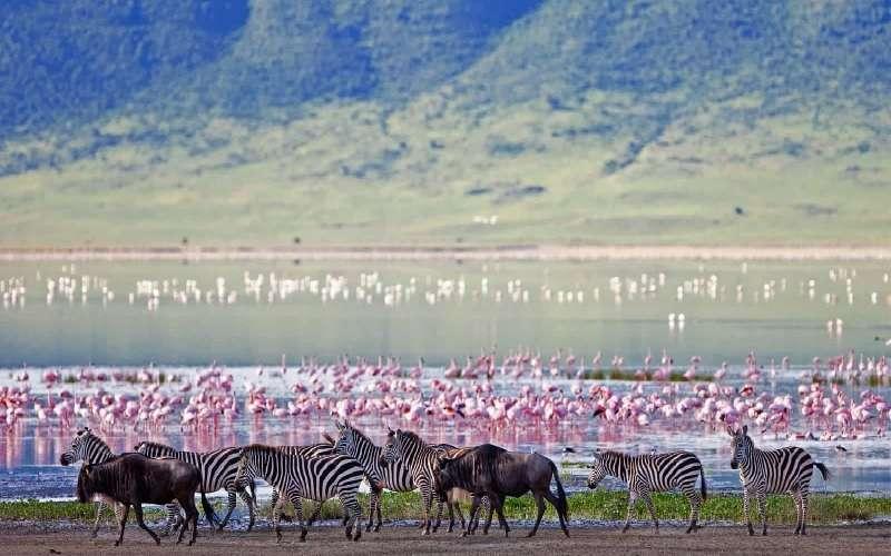8 Day Classic Tanzania Journey